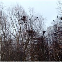 Глядя из окна.. :: Vladimir Semenchukov