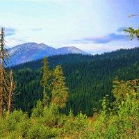 Предвечерье в горах :: Сергей Чиняев