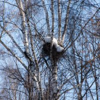 Пока еще занято зимой... :: Владимир Безбородов