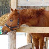 Любопытная лошадь :: Юлия Ошуркова