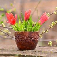 Первые тюльпаны :: Ольга Гукова (Olka-rada5)
