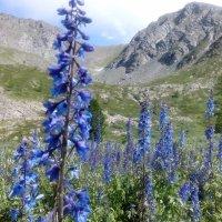Каракольские озера :: Ирина Сафонова