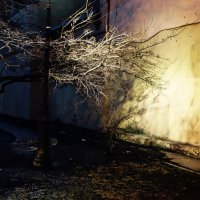 в ночных дворах :: Елена