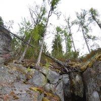 И на камнях растут деревья... :: Ольга