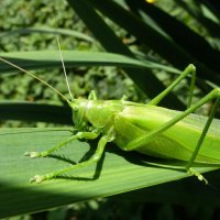 Он весь такой зеленый был!... :: Лидия Бараблина