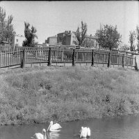 Харьков, зоопарк. 1963 :: Олег Афанасьевич Сергеев
