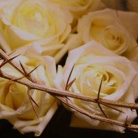 Шипы и розы :: Дмитрий Проскурин