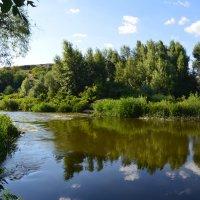 река Калетва. :: Виктор