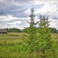 Деревенский пейзаж :: Лариса Лорейн