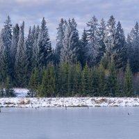 Лес на берегу замерзшего пруда :: Sergey Chelishev