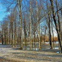 Весна пришла... :: Sergey Gordoff
