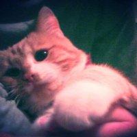 Котик лежить :: Танюша
