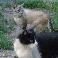 Кошки - это маленькие фабрики по производству благости!... :: Алекс Аро Аро