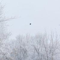 Зима :: Татьяна Золотых