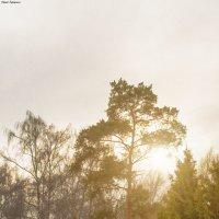 Закат в пасмурную погоду. :: Сергей Гутерман