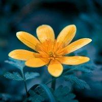 Flowers :: Денис Будняк