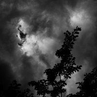 Мрачное настроение :: Роза Бара