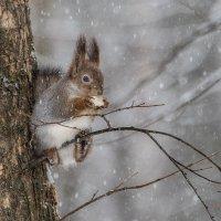 Снегопад. :: Владимир Безбородов