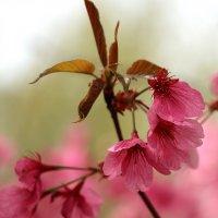 Весенние красоты экопарка :: Светлана