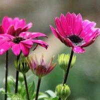 цветы весенние :: Антонина Владимировна Завальнюк