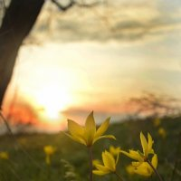 Садилось солнце,пряталось за лесом. :: Олег Рыбалко