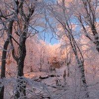 лес зимой :: Александр