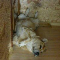 А Вы умеете так спать? :: Татьяна Лобанова