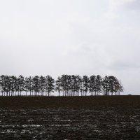 Серая весна :: Nikolay Svetin