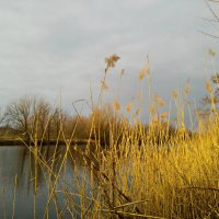 Весенний пейзаж :: Татьяна Королёва