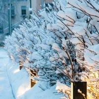 Зимний город :: Михаил Сазонов