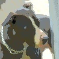 любимый собачка в быстрой обработке. :: Ариэль Volodkova