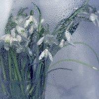 Сквозь стекло :: Lusi Almaz