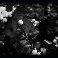 Осень на даче :: alteragen Абанин Г.