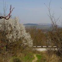 Весна в Белогорье :: Александр Рыжов