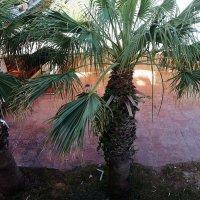 Тунис :: Лариса