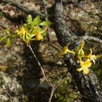 Лесные цветы :: Алексей Golovchenko