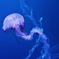 В медузариуме :: Natali Positive