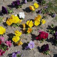 Цветы на земле :: Валерий Дворников