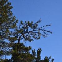 Деревья в танце :: Виталий Россия