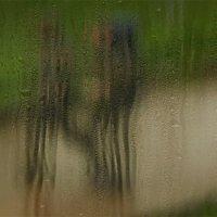 Дождь. :: Вера Катан