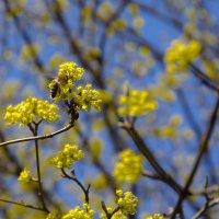 Весна пришла :: Александр Крупский