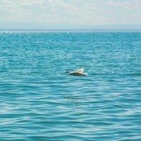 Монгольское море. (оз.Хыргыхнур) :: Сергей Карцев