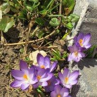 Первые цветы весны :: Дмитрий Никитин