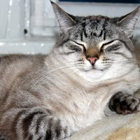 Кот,который всё время спит... :: Галина Полина