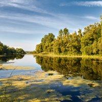Утро на реке... :: Алексей Сопельняк