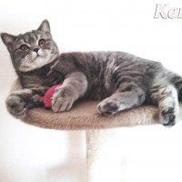 кошечка Кети :: Людмила Lamerna