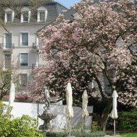 Весна в городе :: Mariya laimite