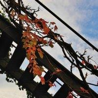 Лестница в небо :: Natali Positive