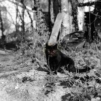 лесной кошак :: Ольга Оригана Ваганова