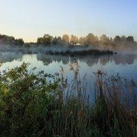 на болоте утро :: Василий Иваненко